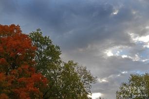 fall2014c